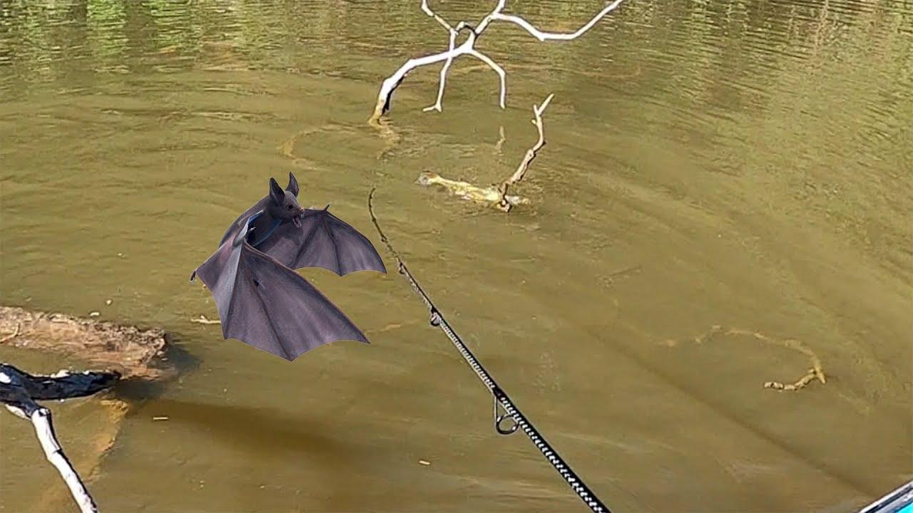 O BICHO VEIO DE BAIXO DÁGUA E VOOU PRA CIMA DO PEIXE, NEM O BATMAN ESPERAVA POR ESSA! Pescaria