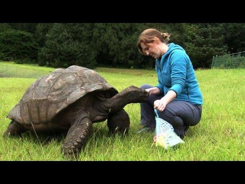 jonathan la tortue 185 ans au moins et apôtre de la lenteur youtube
