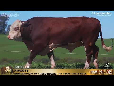 LOTE 010