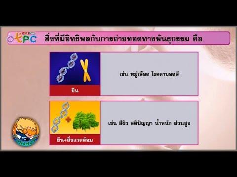 ลักษณะทางพันธุกรรม - สื่อการเรียนการสอน วิทยาศาสตร์ ม.3