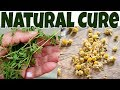 KILL CANCER CELLS NATURALLY With These 5 PROVED CANCER Cells KILLING Essential OIL | NATURAL CURES