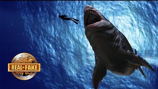 LIVING MEGALODON CAUGHT ON TAPE  - real or fake?