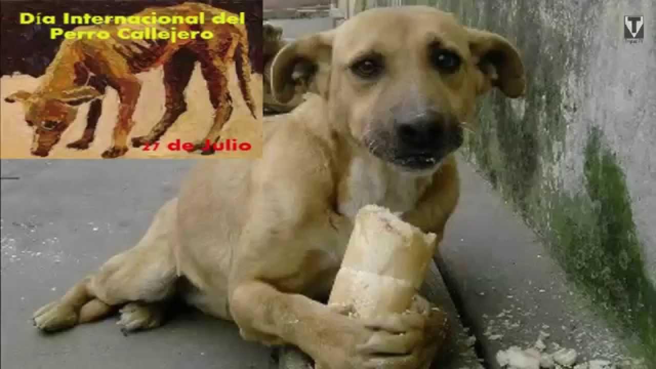 Hoy Es Día Internacional Del Perro Callejero Hoy Es 27