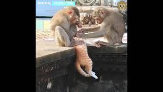 Epic Monkey Fails Compilation | Funny Monkey Videos | Funniest monkey video | #funny_money_video