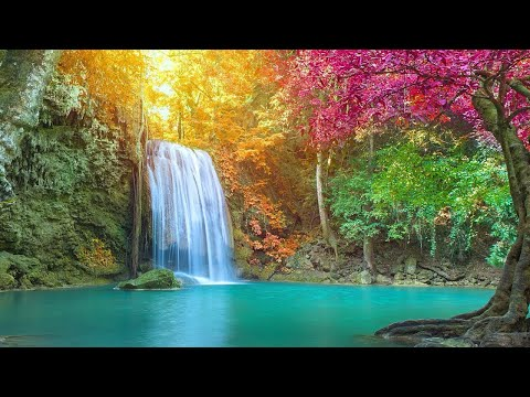 🔴 Peaceful Relaxing Music LIVE 24/7: Music for Deep Sleep. Music for Relaxation, Massage, Meditation