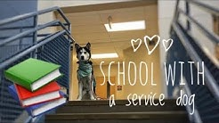 Service Dog at High School