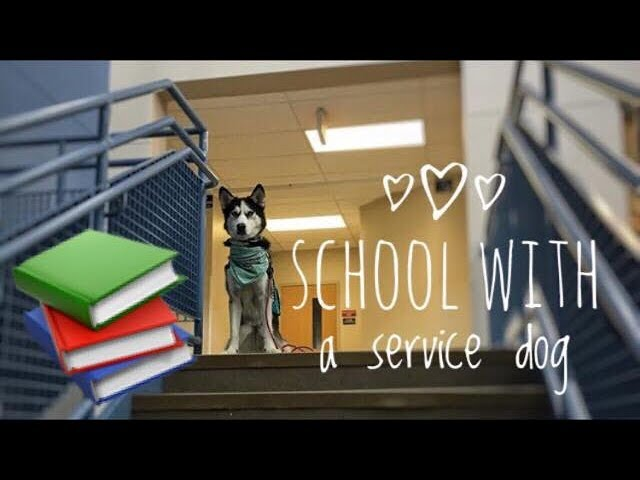 service-dog-at-high-school