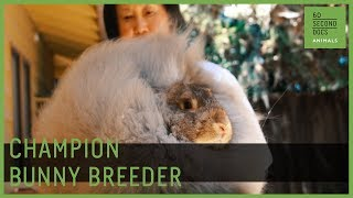 The Unbearable Fluffness of Champion Bunny Breeding