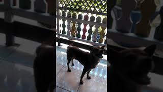 Bermain Dengan Anjing Kesayangan