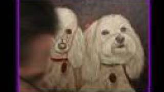 Maltese And Poodle Art