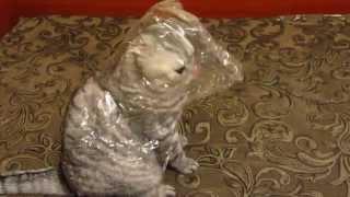 Дурная кошка