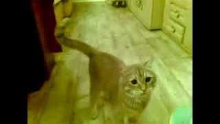 Cмешной кот приколы - funny cat video. Прикольные собаки и кошки