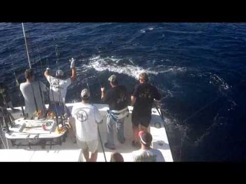 Tuna Fishing from Fourchon Louisiana  aboard the Charter Boat Annie Girl