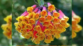 Цветы необычайной красоты!