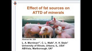 Effect of fat sources on ATTD of minerals