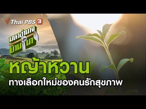หญ้าหวาน ทางเลือกใหม่ของคนรักสุขภาพ - วันที่ 01 Mar 2020