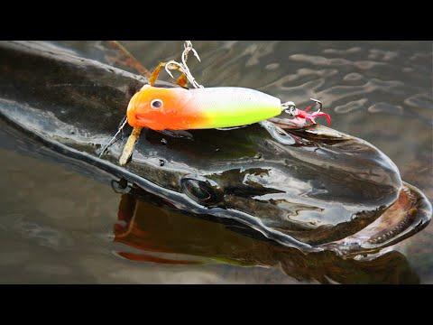 ПОКЛЕВКИ ЩУКИ НА ПОППЕР. Это самая зрелищная рыбалка!!!
