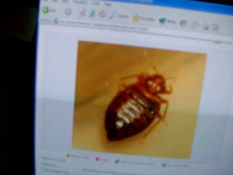 Crystal Silica Gel Cat Litter Crushed & Powdered Can Kill A Bed Bug : Habits