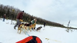 Dog Sleds Take Team For A Ride And Get Tangled