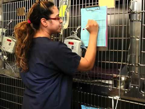 Garden State Veterinary Specialists, Animal Care, Tinton Falls, NJ