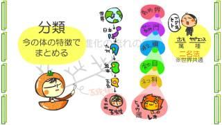 生物6章7話「系統図」byWEB玉塾
