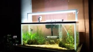 ¿Cuanto tiempo tener encendida la lámpara del acuario ?