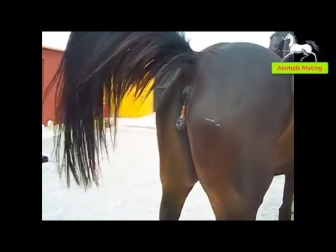 World Wildlife - Horse species mating season 1 | Wonderful farm thumbnail