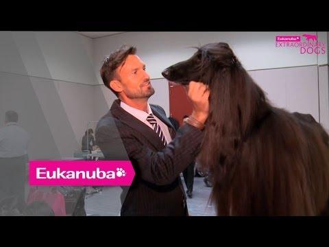 Eukanuba World Challenge - Colin the Afghan Hound - Part 2