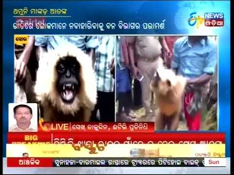 Troublesome Mental Monkey Finally Caught at Soro of Balasore district:Etv News Odia