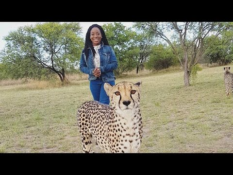 PLAYING WITH CHEETAH'S