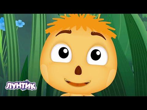 Лунтик | Пчелы 🐝🐝🐝 Сборник мультиков для детей