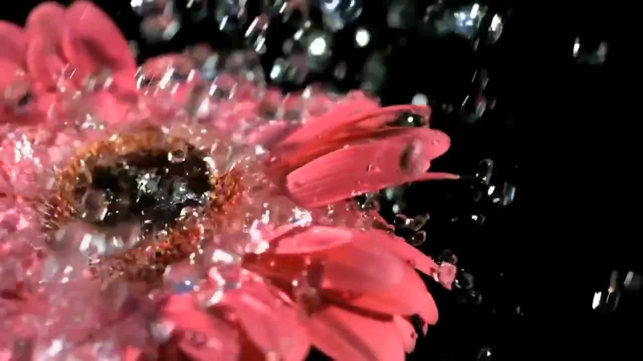 Цветок под дождём