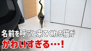 ママが呼ぶと必ず来てくれる甘えん坊な猫