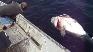 Pescaria de cherne gigante (queimado) - Vantuil - Parte II