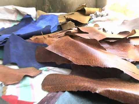 Fish Leather Development Process At KIRDI Western Region Campus (KWRC), Kenya
