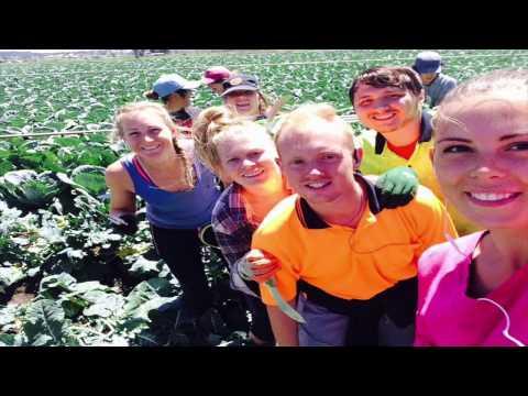Farm Work 2016 Gatton