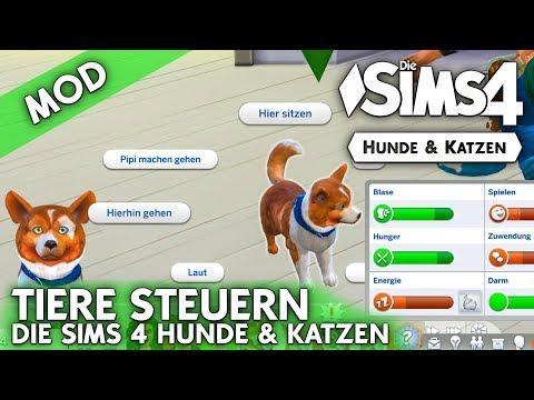 Die Sims 4 Hunde Katzen Tiere Selbst Steuern Und Bedurfnisse Sehen Mod Youtube