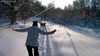 Zara walking in the forest. Irish Wolfhound.4K