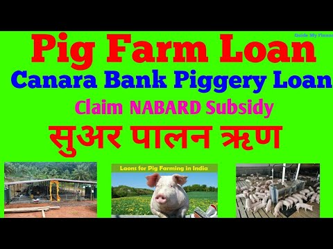 How to get Piggery Loan from Canara bank | Pig Farm Loan | Loan for Piggery