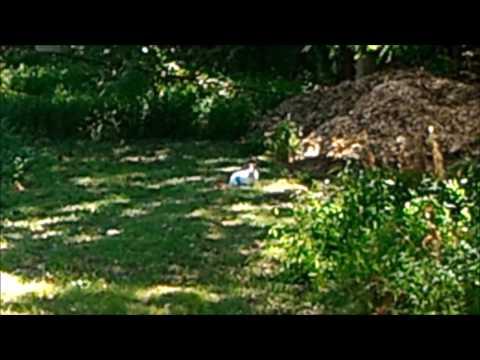 Rabbit Dumped in woods