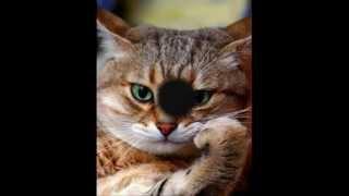 Los misterios de los gatos