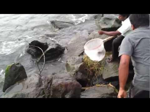 Munambam Fishing