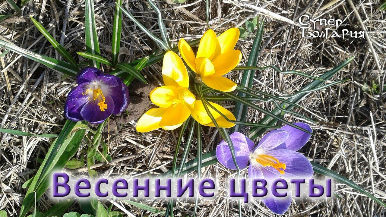 Цветки крючком в два цвета