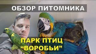 Обзор питомника попугаев Парк Птиц Воробьи.