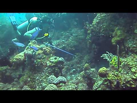 The PADI Invasive Lionfish Specialty course at Stuart Cove's Dive Bahamas