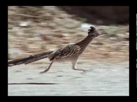 Roadrunner 26 mph - YouTube