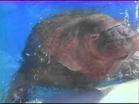 SeaWorld - Make Contact Series - Move Closer -  Commercial - 1980s -1990s