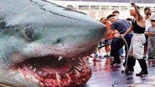 10 อันดับ ฉลามยักษ์ที่ใหญ่ที่สุดในโลกที่มนุษย์เคยจับได้ (ใหญ่อย่างกับเมกาโลดอน)
