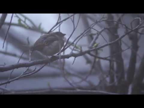 the dank birbs documentary