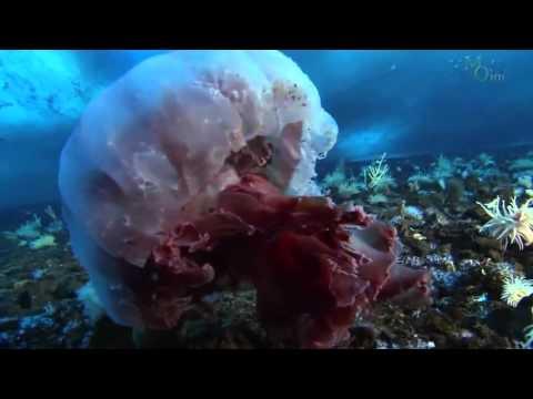 Animals in the Antarctic Ice HD